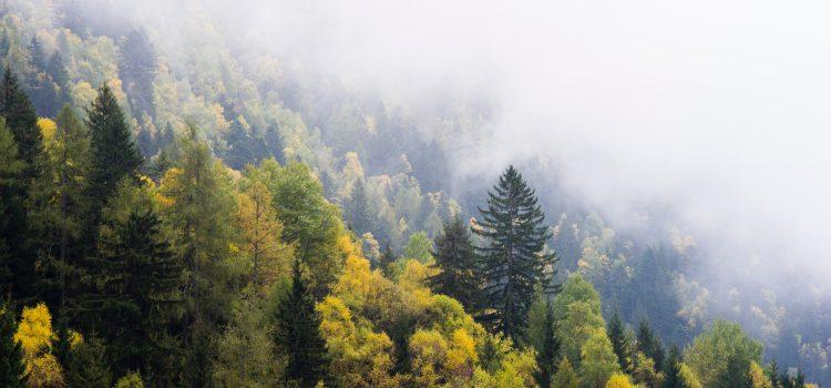 Votul pentru DNA-ul Pădurilor, amânat de senatori. Legea, retrimisă în comisie