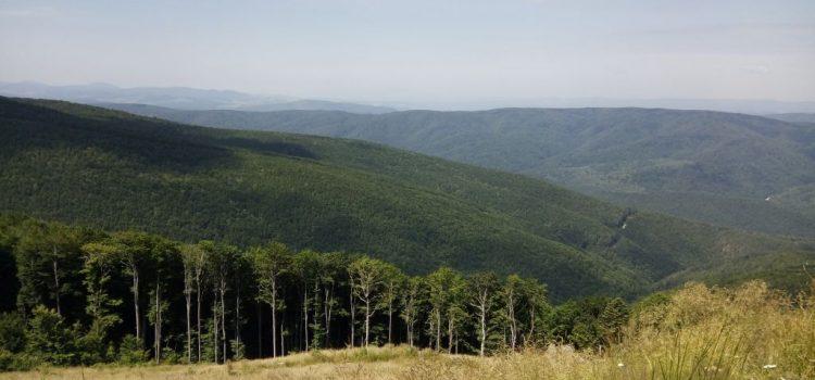 DNA-ul pădurilor, atacat la CCR de Guvern. USR cere explicații premierului Ludovic Orban