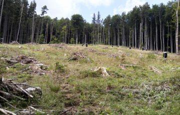 USR susține necesitatea aplicației Inspectorul Pădurii