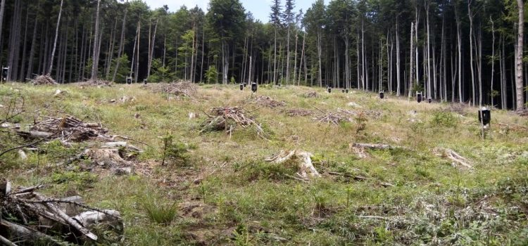 USR respinge acuzațiile calomnioase ale Ministerului Apelor și Pădurilor
