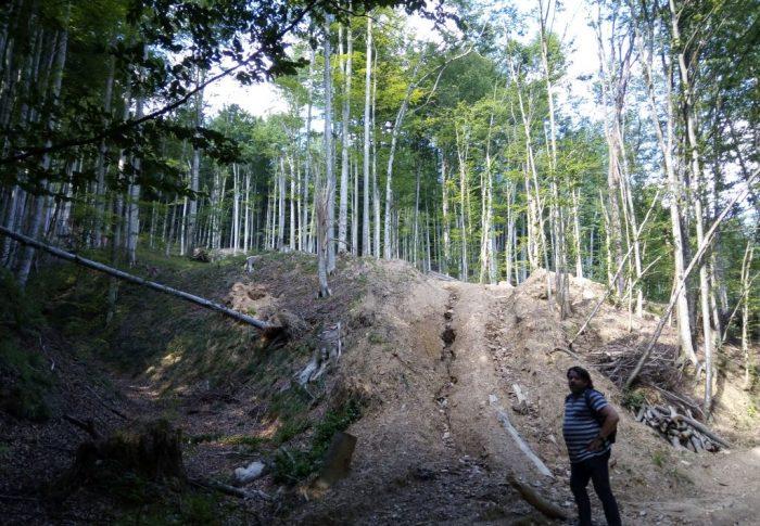 Prejudicii de peste 100 de milioane de lei din cauza tăierilor ilegale de păduri din județele Cluj și Alba