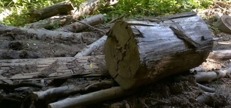 Dezbatere pe tema interzicerii totale a tăierilor de păduri în Parcurile Naționale