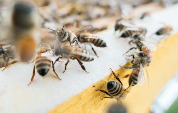 Impactul insecticidelor din familia neonicotinoidelor asupra mediului