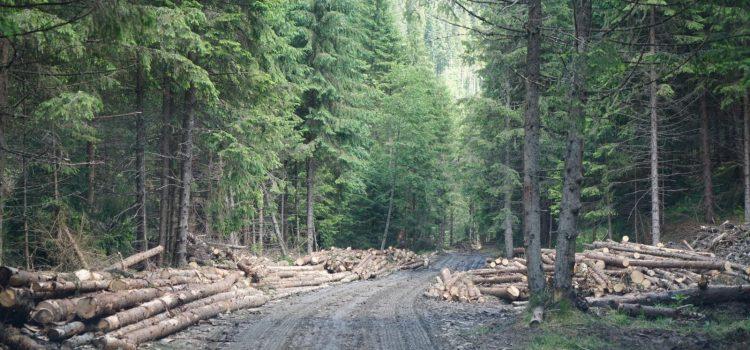 Lege USR pentru stoparea tăierilor ilegale de păduri și evitarea infringementului