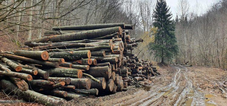 Mihai Goțiu: Costel Alexe a dat liber drujbelor Romsilva să distrugă Parcul Național Semenic – Cheile Carașului. Ministrul a călcat în picioare promisiunea făcută la învestire