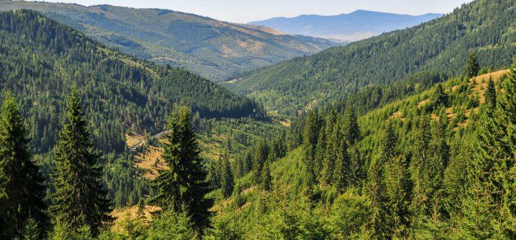 Ziua Pământului: Manifest USR PLUS pentru protejarea pădurilor periurbane